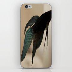 Betta Fish iPhone & iPod Skin