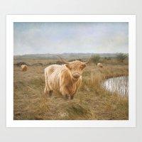 Highland Moo's Art Print