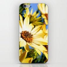 Sun Worshipper iPhone & iPod Skin