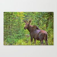 Angry Moose Canvas Print