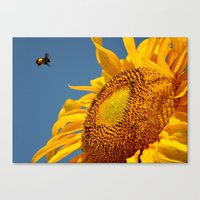 Mr. Yellow Britches Canvas Print