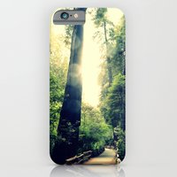 Muir Woods Path 2 iPhone 6 Slim Case