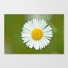 One little Daisy 184 Canvas Print