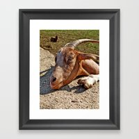 Mr. Goat Framed Art Print