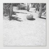 Cacti - in Black & White Canvas Print
