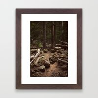 Forest Trail Framed Art Print
