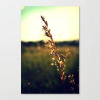 Prairie Wild - Color Canvas Print