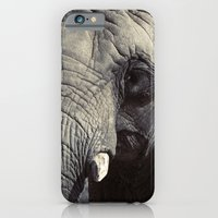 iPhone & iPod Case featuring ELEPHANT OH MY! by ChelseeTaylor