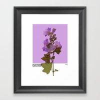 PANTONE 529 U Framed Art Print