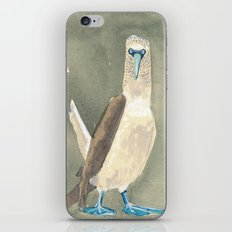blue footed booby iPhone & iPod Skin