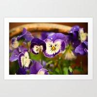 Viola - color Art Print