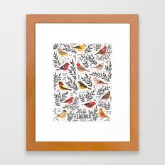 Finches of North American Field Guide Framed Art Print