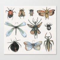 Entomology Canvas Print