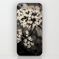 Valeriana sitchensis iPhone & iPod Skin