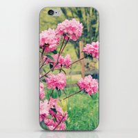 Pink Azalea Bushes iPhone & iPod Skin
