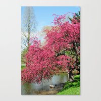 Spring Crabapple Blooms Canvas Print