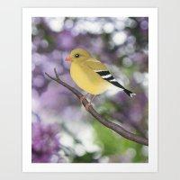 American goldfinch female bokeh Art Print