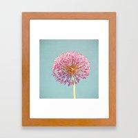 Pink Allium Framed Art Print