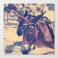 Santorini Donkey Canvas Print
