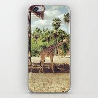 Giraffe Family iPhone & iPod Skin