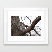 Squirrel with peanut Framed Art Print