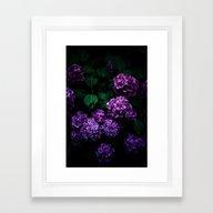 Hydrangea 01 Framed Art Print