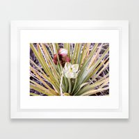 Yucca Flowers in Bloom Framed Art Print