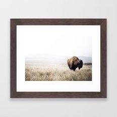 Bison stance Framed Art Print