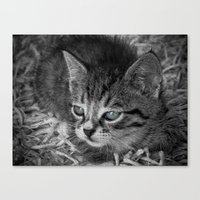 Baby Kitten Canvas Print