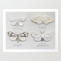 Moth Collection Art Print