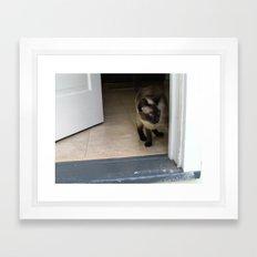 jaco cat Framed Art Print