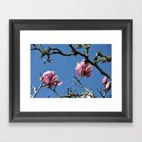 Saucer Magnolias II Framed Art Print