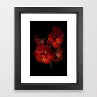 Scarlet Amaryllis Framed Art Print