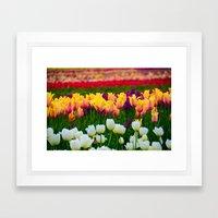 Fields of Color III, Woodburn Tulip Festival Framed Art Print