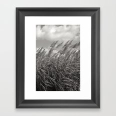 Sugar Cane Field  Framed Art Print