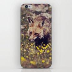 Summer Fox iPhone & iPod Skin