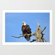 Art Print featuring Patiently Waiting! by Alaskan Momma Bear