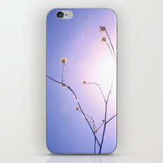Delicate Things iPhone & iPod Skin