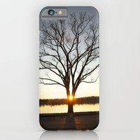 Sunset Between A Tree iPhone 6 Slim Case