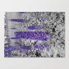 Purple Balboa Canvas Print