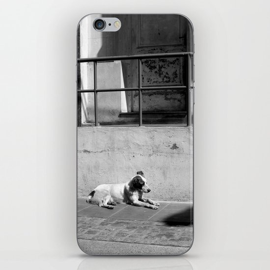 Stray Dog iPhone & iPod Skin
