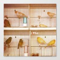 Marche Aux Oiseaux 2 Canvas Print