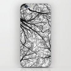 Branching Panorama iPhone & iPod Skin