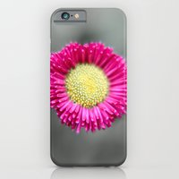 iPhone & iPod Case featuring Blossom from a Daisy Isolated on Gray Background by pASob