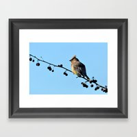 Waxwing On A Winter's Da… Framed Art Print