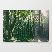 Canvas Print featuring Forest Park Trees by Keaten Abbott