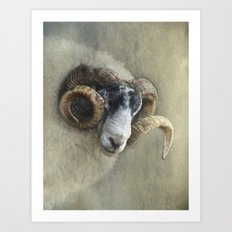 Dougal - A black faced Welsh ram Art Print
