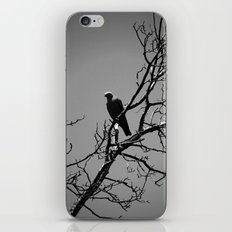 Kite iPhone & iPod Skin