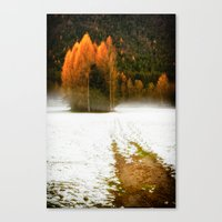 Pines in the snow Canvas Print
