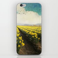 fields of daffodils iPhone & iPod Skin